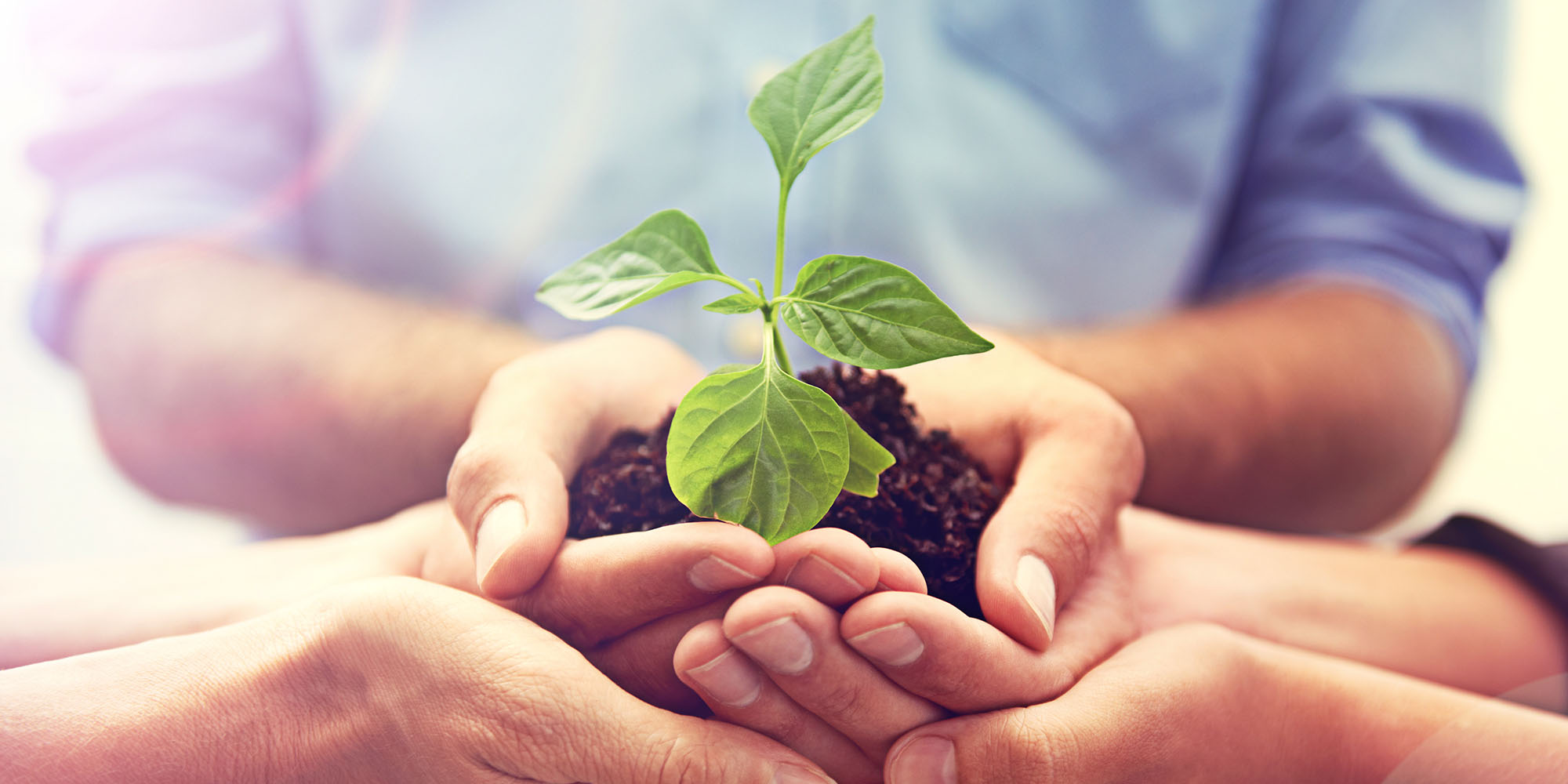 Reasons to Invest in an Environmental Management Plan!
