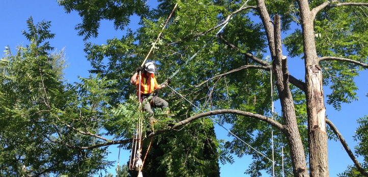 The Services Of The Tree Removal