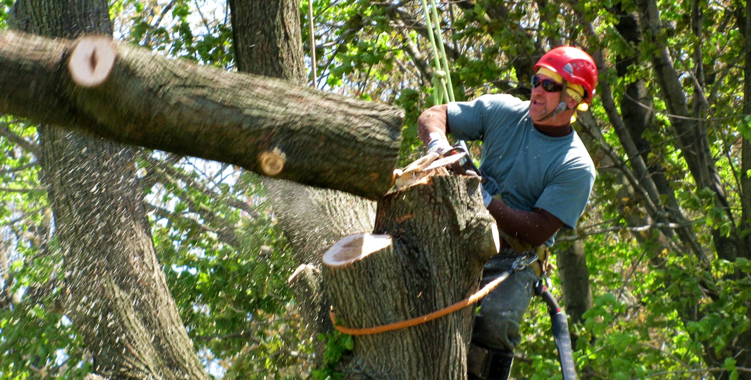 Get information about tree removal Gold Coast