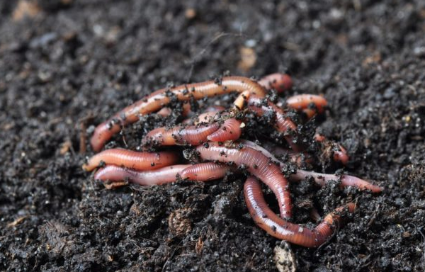 Why you need to buy worm farm