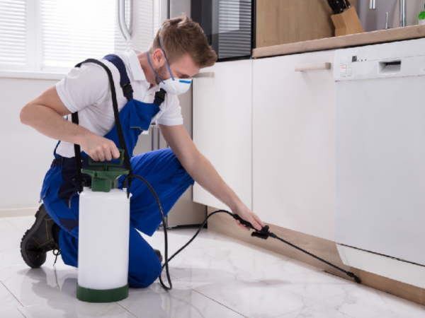 How To Choose The Best Pest Control Company Sunshine Coast