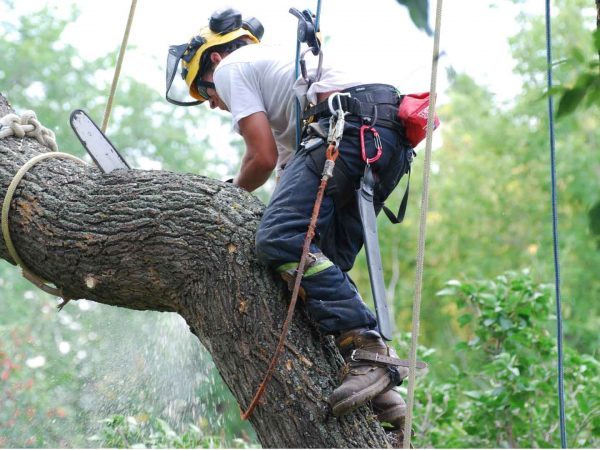 What are the Benefits of Tree Removal Gold Coast Services?
