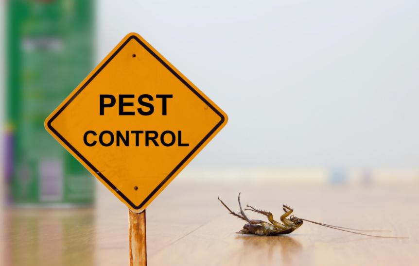 pest inspection Kingscliff