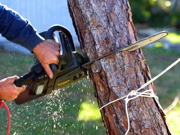 Call an Arborist If You Are Worried About A Dying Tree