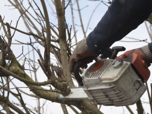 Hiring the Best Gold Coast Tree Removal Service